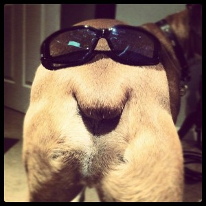 a dog's butt with sunglasses.