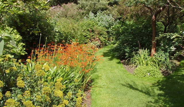 Crocosmia_Aurea_at_Chelsea_Physic_Garden_-_geograph.org.uk_-_1429573