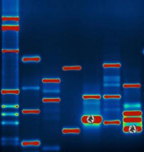 DNAsquatch copy