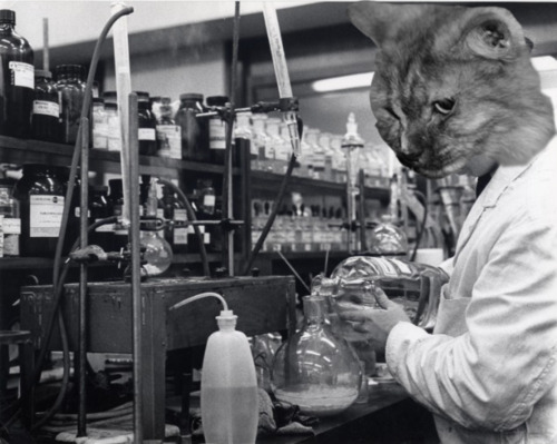 Photo of a cat's head superimposed on a scientist in a lab
